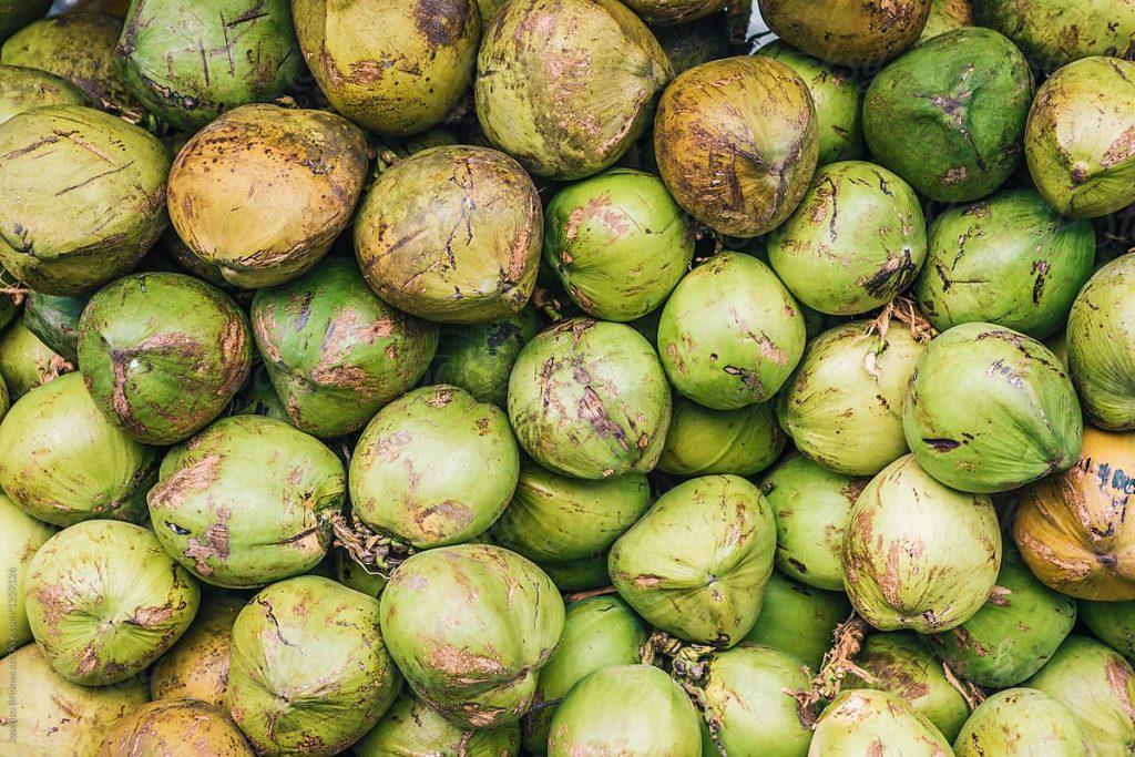 Fresh Coconuts via Stocksy United