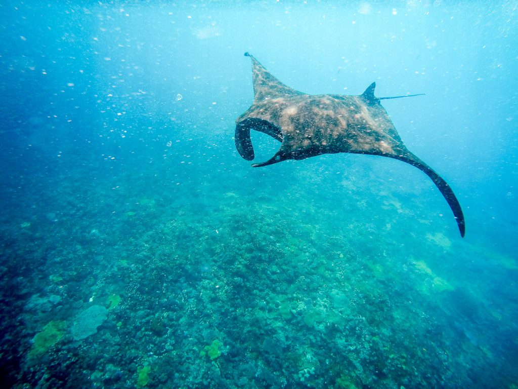 Manta Rays via Top Places in Nusa Lembongan